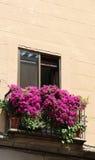 En balkong med pelargon som blommar, segovia, Spanien Royaltyfria Bilder