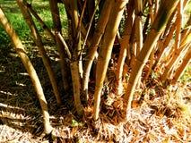 En bambu i parkera Royaltyfria Foton