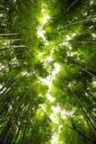 En bambudunge som flödar som en flod royaltyfri bild