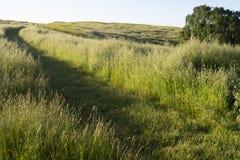 En bana har gjorts klar för National Park Service medel i grässlättarna av monteringen Wanda i Martinez, Kalifornien royaltyfri fotografi