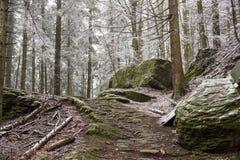 En bana i den djupfrysta skogen Royaltyfri Bild