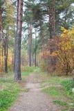 En bana i höstskogen arkivbilder