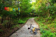 En bana i skogen Royaltyfri Foto