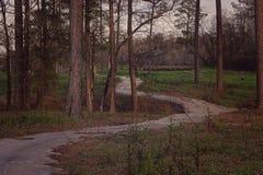 En bana i skogen Royaltyfria Bilder