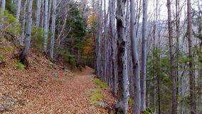 En bana i skogen Fotografering för Bildbyråer