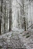 En bana korsar den djupfrysta skogen Royaltyfri Foto