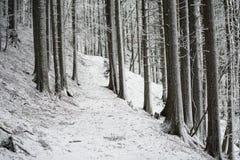 En bana korsar den djupfrysta skogen Royaltyfri Bild