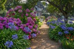 En bana med den färgrika vanliga hortensian leder till ett lantligt hus Arkivbild