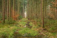 En bana som göras klar av träd Royaltyfria Bilder