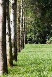 En bana som inramas av träd Fotografering för Bildbyråer
