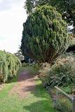 En bana som kör upp mitten av en trädgård royaltyfri fotografi