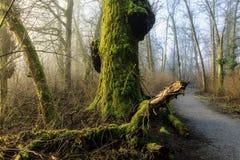En bana som leder dolda träd för förgången mossa Fotografering för Bildbyråer