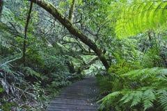 En bana som leder in i en frodig grön skog Arkivfoto