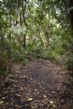 En bana till och med djungeln Royaltyfri Foto