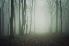 En bana till och med en mörk skog med dimma royaltyfria bilder