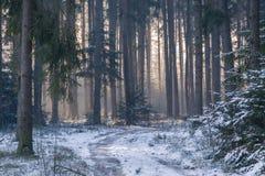 En bana till och med en skog Arkivfoton
