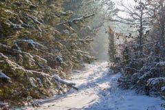 En bana till och med en skog Fotografering för Bildbyråer