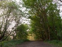 En bana till och med en skog under solnedgång Royaltyfri Fotografi