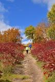 En bana till och med hösten färgade sumacen finner flera fotvandrare Arkivbilder