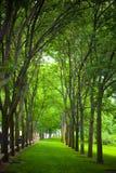 En bana till och med träden Royaltyfri Fotografi