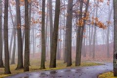 En bana till och med träden Royaltyfria Bilder