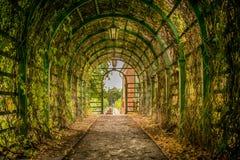 En bana till och med en tunnel av murgrönan arkivfoto