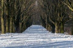 En bana till och med vinter Arkivfoto