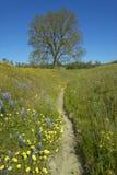 En banaspolning förbi ett ensamt träd och en färgrik bukett av vårblommor som blomstrar av rutt 58 på den Shell Creek vägen som ä Arkivfoton