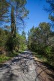 En banaväg till och med skogen Royaltyfri Bild
