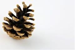 En begreppsbild av en kotte sörjer - naturen - med kopieringsutrymme Arkivfoto