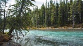 En bergflod i Kanada arkivfilmer