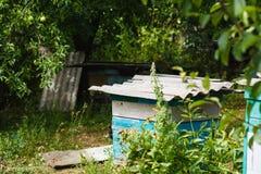 En bikupa i trädgården Arkivbilder