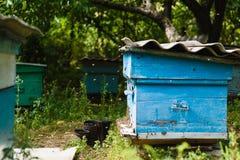 En bikupa i trädgården Arkivfoton