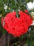 En bild av en röd blomma Royaltyfria Foton
