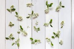 En bild med blommor Fotografering för Bildbyråer