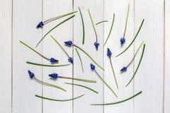 En bild med blommor Royaltyfri Fotografi