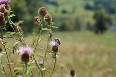 En bild som fångas med trevlig bokeh i naturen, med ett bi och några färgrika blommor, i Baden-Baden, Tyskland fotografering för bildbyråer
