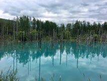 En bild som innehåller träd som är utomhus-, vatten, himmel arkivfoton