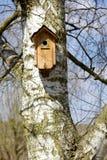 Birdhouse på en björkTree Arkivbild