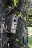 En Birdhouse i snowen Royaltyfri Bild