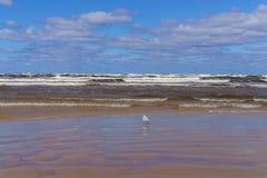 En blåsig dag på kusten av golfen av Riga Jurmala Lettland royaltyfria foton