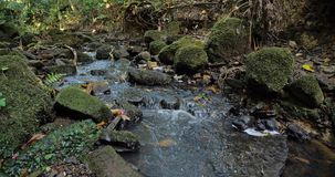 En bladdra bäck i en skog royaltyfria foton