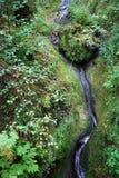 En bladdra ström av den Marienschlucht ravin. Royaltyfri Fotografi
