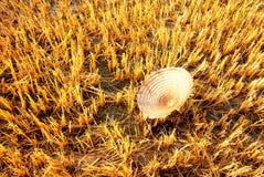 En bladhatt på skördat fält Arkivbild