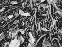 En blick till jordningen i svartvitt Royaltyfri Fotografi