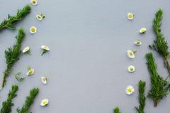 En blom- modell av vita vildblommor, gröna sidor, filialer på en grå bakgrund, utrymme för text i mitten Lägenhet överkant royaltyfri foto
