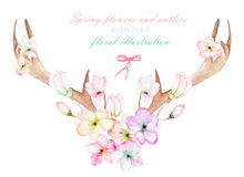 En blom- vattenfärgillustration med hornen på kronhjort som flätas ihop våren, blommar Arkivfoto