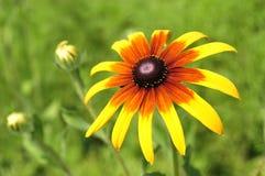 En blomma Royaltyfri Foto