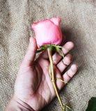 En blomma i mina händer arkivbilder