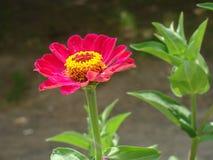 En blomma i staden Arkivfoto